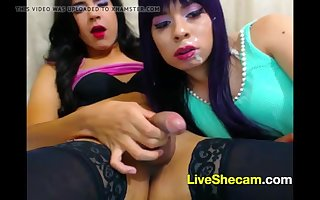 Shemale sucking shemale cock cumshot live